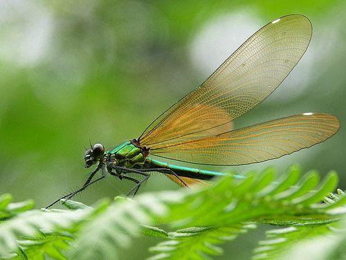 Jeudi sur les ailes d'une libellule....